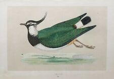 1857 Antique Print; Peewit from Morris' A History of British Birds