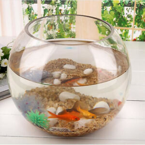 Round Clear Crystal Glass Bowl Clear Sphere Vase Mini   Tank Turtle Jar