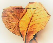 "150 Indian Almond Leaf | Catappa Ketapang | Naturally Aged & Dried 8""-9"" Premium"