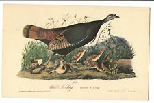 Vintage Postcard Wild Turkey Drawn by John James Audubon