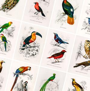 Vintage Birds Prints - Animal Posters - A4 A3 A2 - Antique Home Decor - Wall Art
