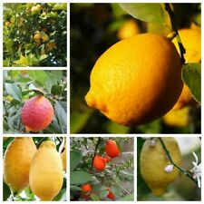 10Pcs Lemon Fruit Tree Seeds 10 Kinds Home Garden Organic Juicy Useful Plants