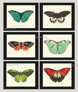 Unframed Butterflies Print Set of 6 Antique Colorful Garden Nature Home Wall Art