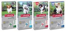 4 pipette Advantix Bayer per cani oltre 25 kg