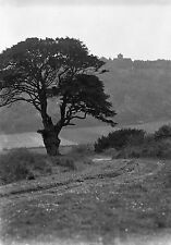 1910s GUILDFORD St Martha #2 Antique Photographic Glass Negative (Surrey Tree)