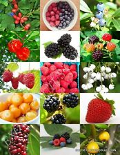 BERRIES MIX, rare wild BERRY exotic edible fruit jam jelly sweet seed 15 seeds