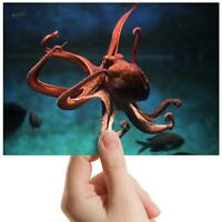 "Octopus Underwater Scuba Dive Small Photograph 6""x4"" Art Print Photo Gift #8329"