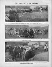 Poilus Soldats Chevaux Abreuvoir Cheval Parc d'Artillerie Canon de 75  1915 WWI