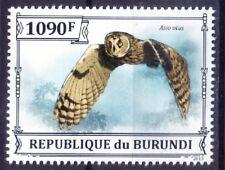 Long-eared Owl, Asio otus, Birds of Prey, Burundi 2013 MNH