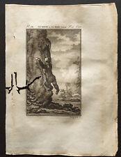 1799 - Buffon - Le kouri ou le petit unau - Gravure zoologie