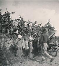 ALSACE c. 1935 - Vendanges Div 4379