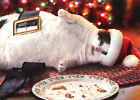 Santa Cat With Cookies Box of 10 Funny Christmas Cards by Avanti Press photo