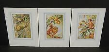 Flower Fairies Cicely M. Barker 3 Prints  c1940 G1#33