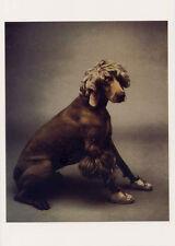 Weimaraner•Baby Afghan 1987•Photo by William Wegman•Dog Postcard