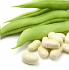 Organic - Suffolk Herbs - Picture Packet Dwarf French Bean Cannellino - 100 Seed