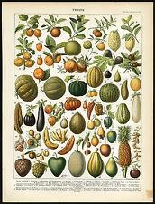 Antique Print-FRUIT-BANANA-TOMATO-MANGO-LEMON-MELON-PAPAYA-FIG-Larousse-1897