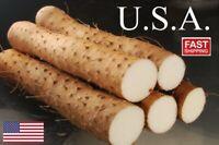 20 Dioscorea polystachya bulbs aka Chinese cinnamon vine /'Air Potato/'