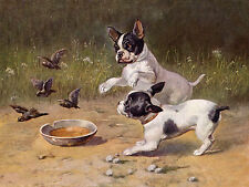 FRENCH BULLDOG DOGS CHASE BIRDS LOVELY DOG GREETINGS NOTE CARD