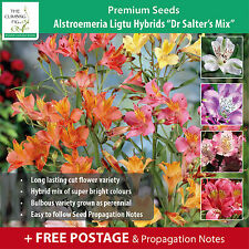 "Alstroemeria Ligtu Hybrids ""Dr Salter's Mix"" seeds. Peruvian / Princess Lily."