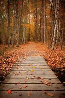 Woodland Path by Michael Hudson 24x16 Photograph Poster LANDSCAPE ART PRINT