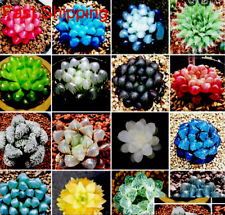 RARE HAWORTHIA COOPERI MIX SUCCULENT CACTUS PLANT /50SEEDS/ Free Shipping $7.75