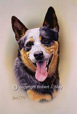 Australian Cattle Dog Print by Robert J. May