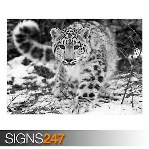 THE SNOW LEOPARD (3479) Animal Poster - Picture Poster Print Art A0 A1 A2 A3 A4