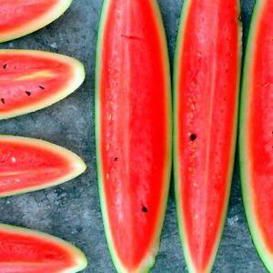 WATERMELON Charleston Grey 25 Seeds organic home grown spring - summer compact