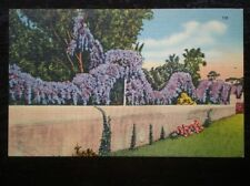 LINEN POSTCARD  USA PURPLE BOUGANVILLEA VINES