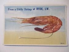 Tiere, Garnele, Shrimp. Leporello Ryde, Isle of Wight (41478)