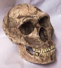 Neanderthal Skull Replica La Ferrassie project 1:1 size