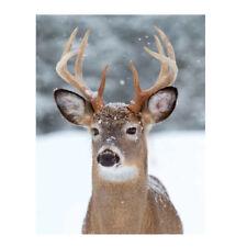 Plaid morbidotto Whitetail Deer di Daunex con stampa digitale 130x160 cm R920