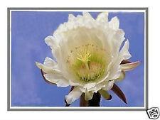 HP G71-345CL G71-347CL G71-351CA LAPTOP LCD SCREEN 17.3