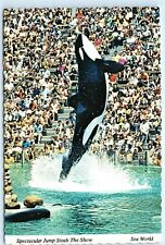 Shamu Sea World San Diego Killer Whale Jumping 4x6 Vintage Postcard A44