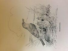 m3e ephemera book plate roland green  birds meadow pipit