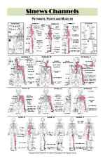 "Sinews Channels Acupuncture Poster (12""x18"" Double Sided)"