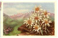 CPA Fantaisie Fleurs de Montagne Edelweiss et Montagne