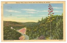 Vintage Postcard Arizona Century Plant Agave Parryi Highway 60 post phoenix