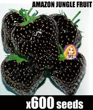 x600 Black Strawberry Seeds AMAZON JUNGLE Rare Strawberries Seed Heirloom