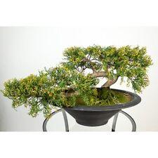 Künstlicher Bonsai-Zeder in Schale, 160 Spitzen, 40cm, wetterfest - Kunstbonsai