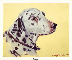 DALMATIAN SPOTTED COACHING DOG FINE ART PRINT Head Study OSCAR By Peter Deighan