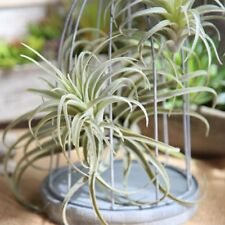 Artificial Pineapple Grass Air Plant Fake Floral As Home Wall Decoration Green