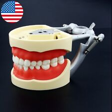 USA kilgore Nissin Type Dental Typodont Model 200 with Removable Teeth