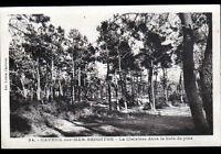 BRIGHTON-PLAGE / CAYEUX (80) CLAIRIERE dans BOIS de PINS en 1947