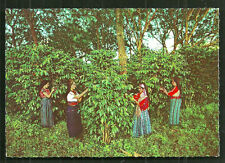 Guatemala Girls Women gathering Coffee Costume