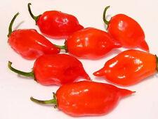 50 HOT RED HABANERO PEPPER Capsicum Chinense Seeds