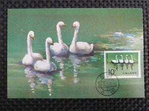 CHINA MK BIRDS SWAN VÖGEL SCHWAN SCHWÄNE MAXIMUMKARTE MAXIMUM CARD MC CM c1291
