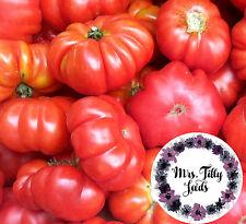 Tomate Costoluto Fiorentino 20 Samen alte italienische Sorte aus der Toscana