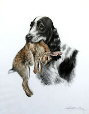 Danchin Leon Spaniel With A Rabbit #1 Print 11 x 14  #4825
