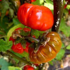 PUMPKIN ON A STICK Ornamental Tiny Ribbed Pumpkin Decoration 5 Seeds